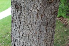 Textura de madera de la corteza de ?rbol imagenes de archivo