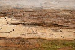 Textura de madera de la textura del viejo fondo de madera Fondo de madera Detalle en el árbol Fondo del árbol Textura del árbol d imagen de archivo libre de regalías