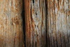 Textura de madera La madera vieja del registro a la parte del tronco o una rama grande de un árbol fue alineada para hacer la par imagen de archivo libre de regalías