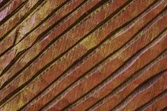 Textura de madera marrón del vintage/tallado Fotografía de archivo libre de regalías