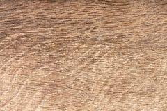 Textura de madera natural de alta resolución del grano del roble del pantano imagen de archivo