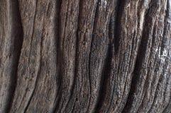 Textura de madera oscura Foto de archivo libre de regalías