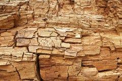 Textura de madera putrefacta sucia Fotografía de archivo libre de regalías