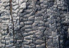 Textura de madera quemada Foto de archivo libre de regalías