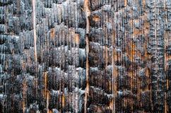 Textura de madera quemada cerca, primer, madera desnuda Fotografía de archivo libre de regalías