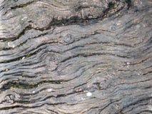 Textura de madera quemada envejecida Imagen de archivo libre de regalías