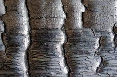 Textura de madera quemada un ascendente cercano, cercano Fotografía de archivo libre de regalías