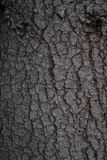 Textura de madera real Imagen de archivo