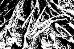 Textura de madera sucia Textura blanco y negro de la madera áspera Corteza de árbol con la superficie de las raíces Imagenes de archivo