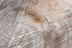 Textura de madera, tocón de árbol seco viejo seccionado transversalmente Fotos de archivo