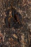 Textura de madera vieja Fotografía de archivo libre de regalías