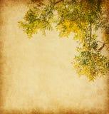 Textura de papel envelhecida com ramo das folhas de outono Foto de Stock