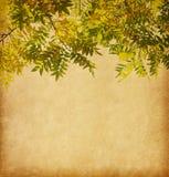 Textura de papel envelhecida com ramo das folhas de outono Foto de Stock Royalty Free