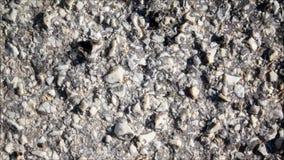 Textura de pedra vídeos de arquivo