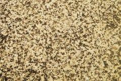 Textura de pedra do fundo Imagem de Stock