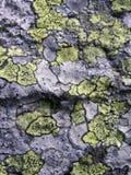 Textura de pedra do líquene Foto de Stock