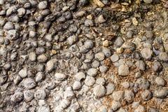 Textura de pedra natural Imagens de Stock Royalty Free