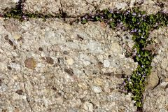 Textura de piedra Imágenes de archivo libres de regalías