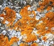Textura de piedra abstracta del grunge como fondo Imagen de archivo