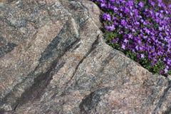 Textura de piedra con las pequeñas florecillas violetas fotografía de archivo libre de regalías