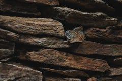 Textura de piedra de la pared de la pizarra, diseño de la arquitectura con las rocas Fotografía de archivo libre de regalías