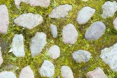 Textura de piedras en la hierba Fotografía de archivo libre de regalías