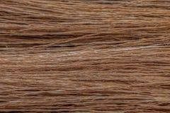 Textura de ramos e de hastes secados da grama fotografia de stock royalty free