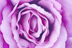 Textura de Rosa. Fotografia de Stock