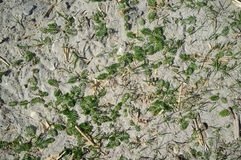 Textura de Sandy Lake Shore com grama foto de stock royalty free