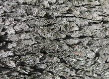 Textura de superfície da casca do fundo 0004 Fotografia de Stock