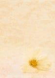 Textura de Tan e flor branca Imagens de Stock Royalty Free