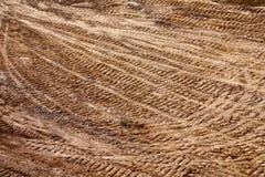 Textura de tierra Imagenes de archivo