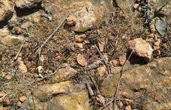 Textura de tierra con las rocas imagenes de archivo