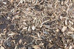 Textura de tierra del bosque Foto de archivo libre de regalías