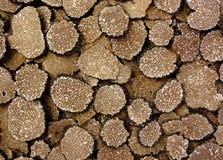 Textura de Turffles Imagem de Stock Royalty Free