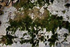 Textura de um muro de cimento velho Fotografia de Stock