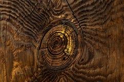 Textura de uma árvore Imagens de Stock
