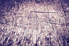 Textura de uma cor do roxo da árvore Fotos de Stock