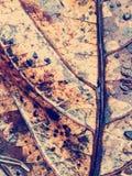 Textura de uma folha Fotografia de Stock