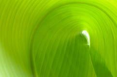 Textura de uma folha verde como o fundo Fotografia de Stock Royalty Free