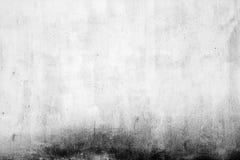 Textura de uma parede do molde Fotos de Stock Royalty Free