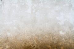 Textura de uma parede do molde Foto de Stock