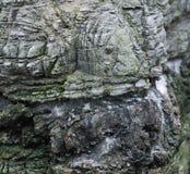 Textura de uma pedra Fotos de Stock Royalty Free
