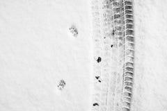 Textura de uma trilha do carro Fotos de Stock