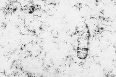 Textura de uma trilha do pé em uma grama coberta com a neve Imagens de Stock Royalty Free