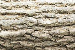 Textura de un árbol, fondo Imagenes de archivo