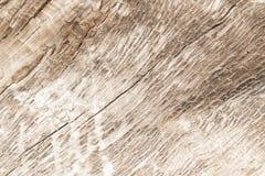 Textura de un árbol, fondo Fotos de archivo libres de regalías