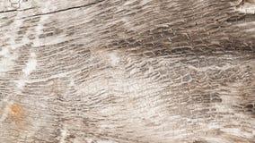 Textura de un árbol, fondo Fotografía de archivo libre de regalías