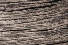 Textura de un árbol viejo lanzado en tierra Fotografía de archivo libre de regalías