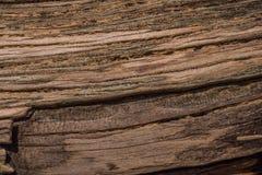 Textura de un árbol viejo lanzado en tierra Imagen de archivo